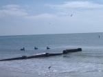 11-14-12 Madeira Beach063