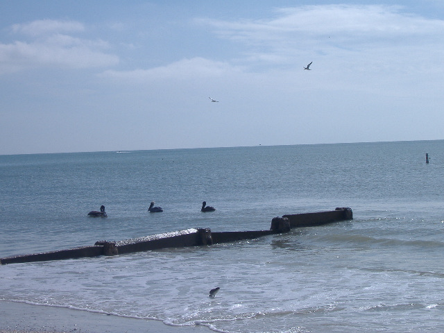 11-14-12 Madeira Beach 063