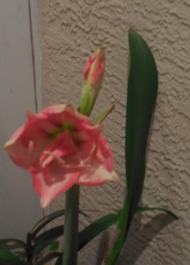 4-12-13 Flower 019