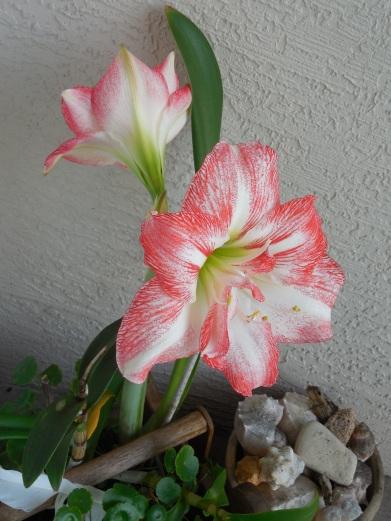4-12-13 Flower 023