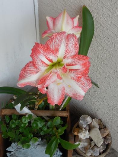 4-12-13 Flower 024