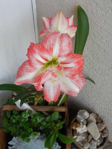 4-12-13 Flower 025