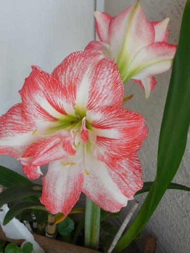 4-12-13 Flower 027