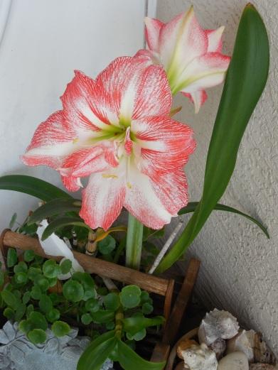 4-12-13 Flower 028