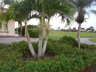 7-28-13 Golf Course 159