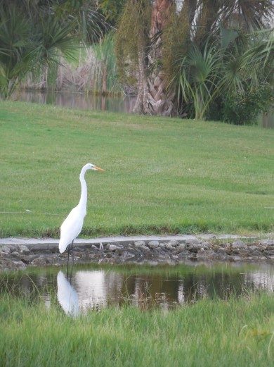 7-28-13 Golf Course 170