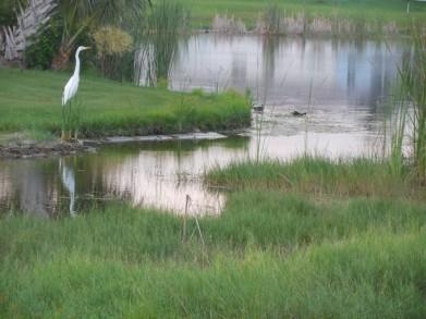 7-28-13 Golf Course 190