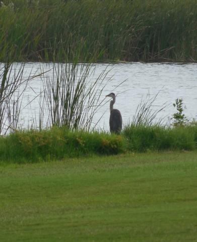 8-11-12 Golf Course 138