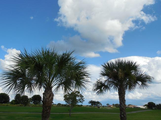 8-24-13 golf course 001