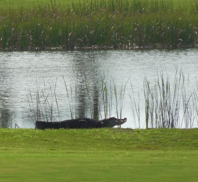 8-24-13 golf course 055