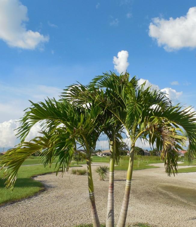 8-24-13 golf course 134