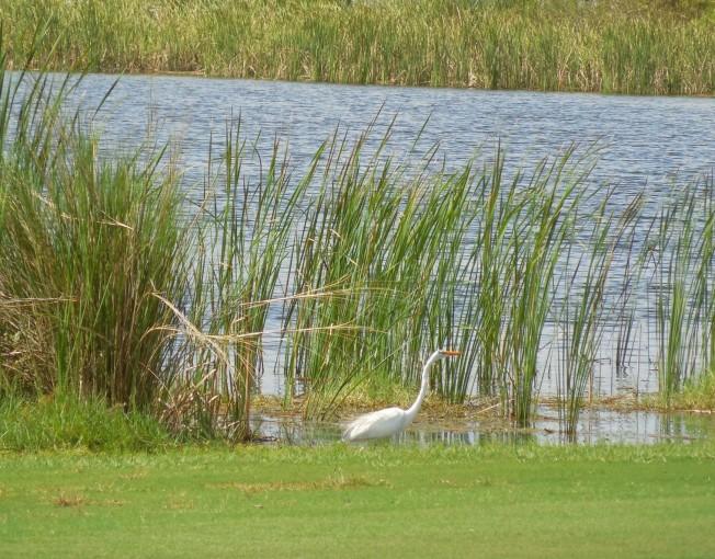 8-26-13 golf course 030