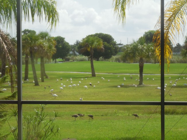 9-26-13 birds on golf course 022