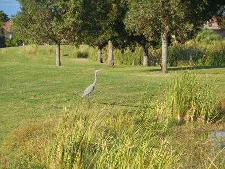 10-19-13 Golf Course 010