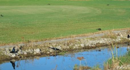 10-22-13 golf course 056