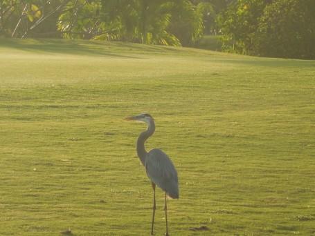 10-31-13 Golf Course 146