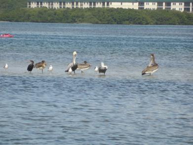 12-9-13-Palm Island 068