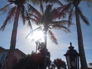 12-9-13-Palm Island 227