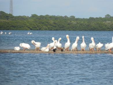 12-9-13-Palm Island 302