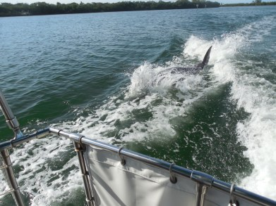 12-9-13-Palm Island 308
