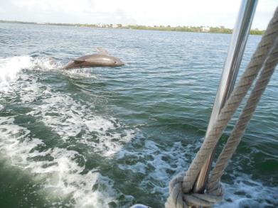 12-9-13-Palm Island 315