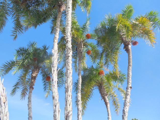 12-9-13-Palm Island 334