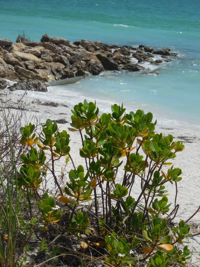 6-12-13 Beach Lido Key 029